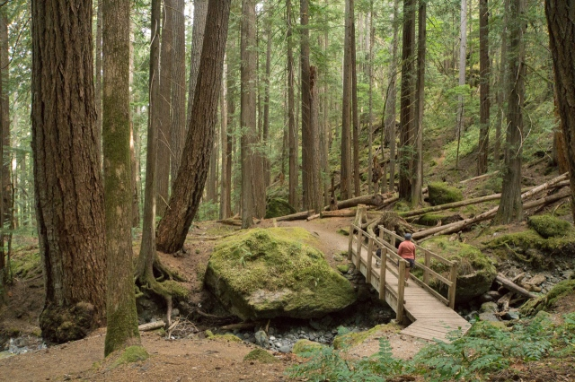 lupin falls (1 of 2)