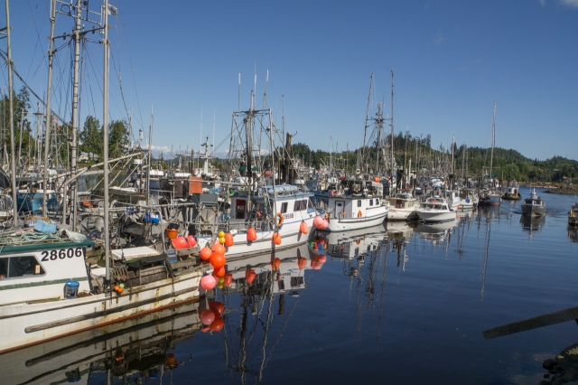 port hardy (1 of 1)